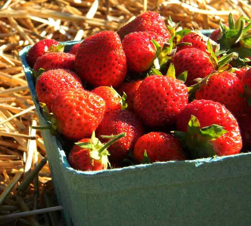 Fresh Strawberries in Quart Box